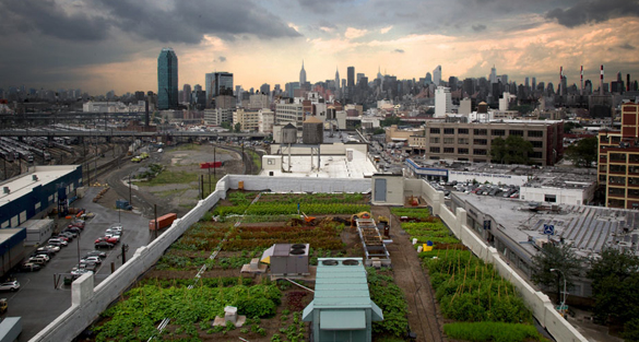 top 5 rooftop-farms