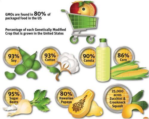 GMO percentage