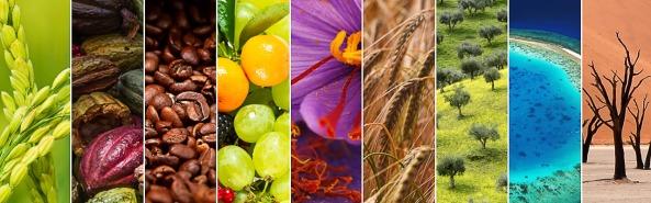 認識食物的來源、發展和烹調,米蘭世博的9大食物組別