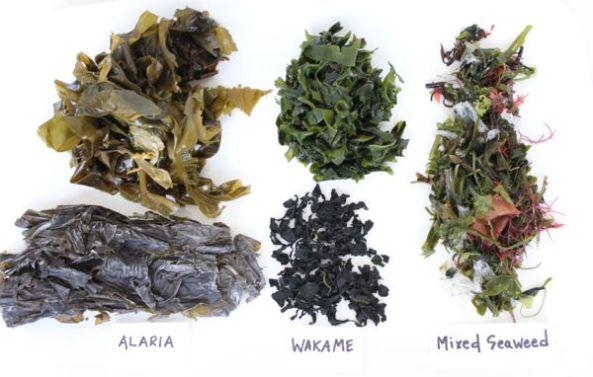 seaweed_types