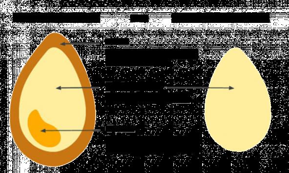whole-grains-explained1-610x366